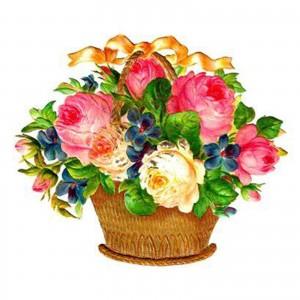 Kvetinový box Prekvapenie AnaFiori 50  €
